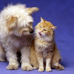 Life Stages of Dogs and Cats | New Petbrosia Infographic