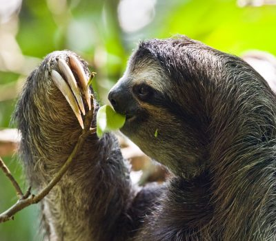 Sloths Being Cute, They Just Can't Help Themselves, Aww