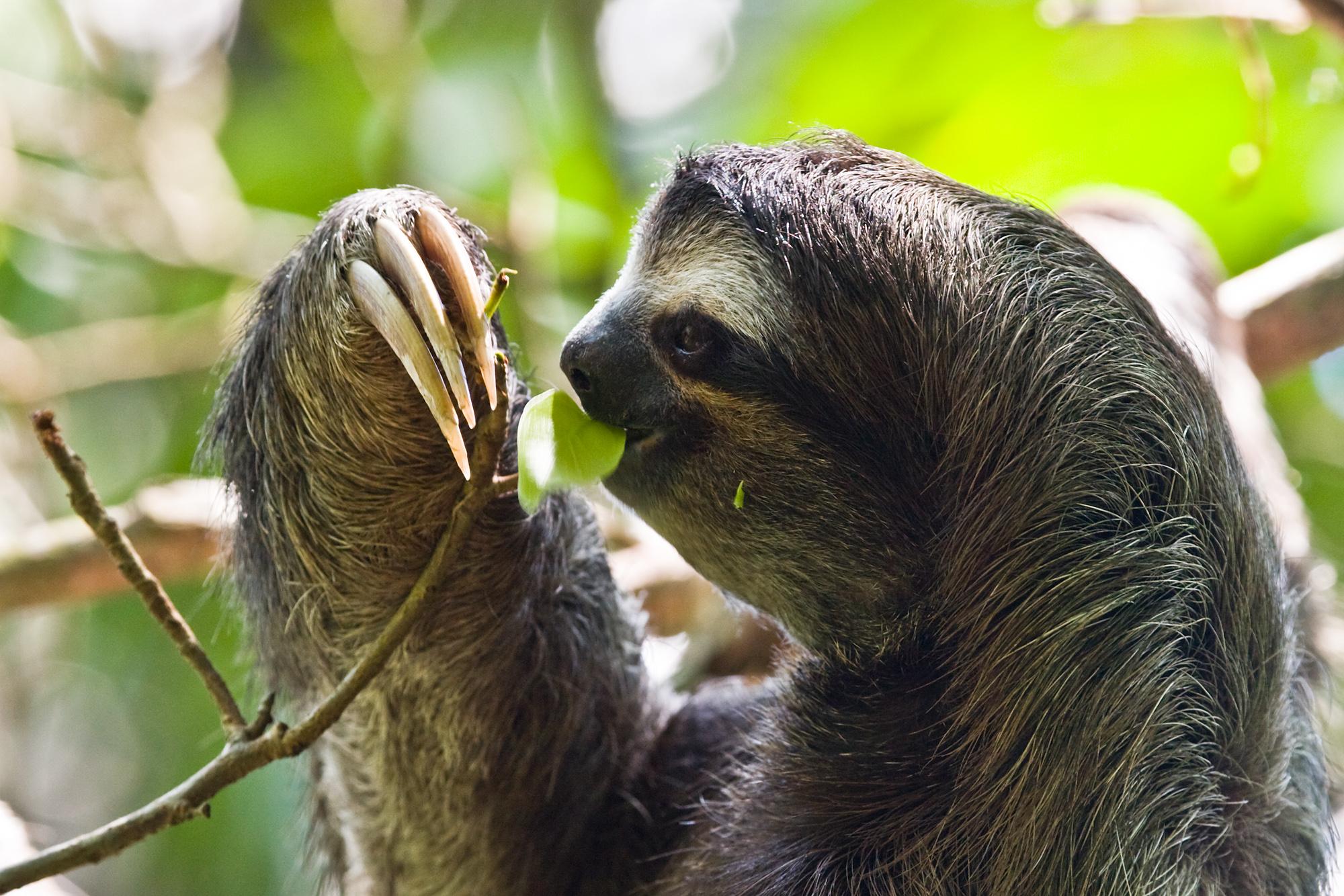 Sloths being cute