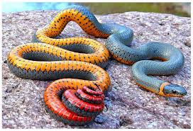 Top 10 Strangest Snakes in the World