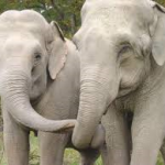 Two Elephants Reunited After More Than 20 Years: Animal Rescue