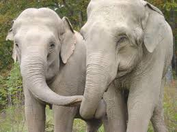 Two Elephants Reunited After More Than 20 Years