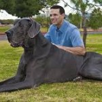 Worlds Tallest Dog Dies at Age 5, Zeus Was One Big Dog!