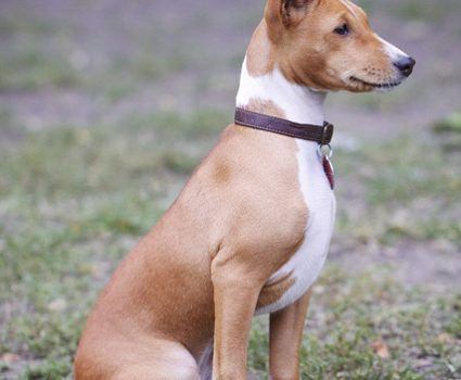 Little Known Dog Breeds