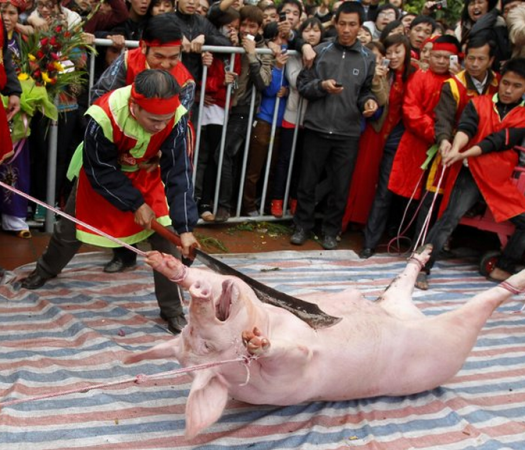 This brutal festival that takes place every year in February near Hanoi, Vietnam every year is archaic and barbaric. WARNING: Graphic Images