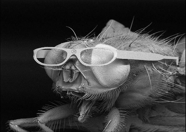 Maggot Facts You Never Wanted to Know