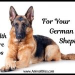 5 Health Care Tips For Your German Shepherd Dog