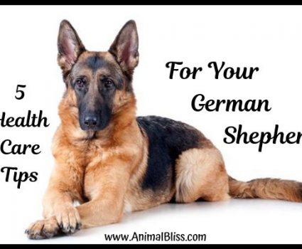 5 Health Care Tips for Your German Shepherd