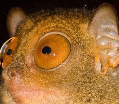 Unique Island Animals : Evolution and Mutation