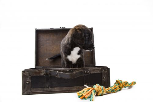 Travelling overseas when you have pets requires a lot of planning, but here are a few options you might consider