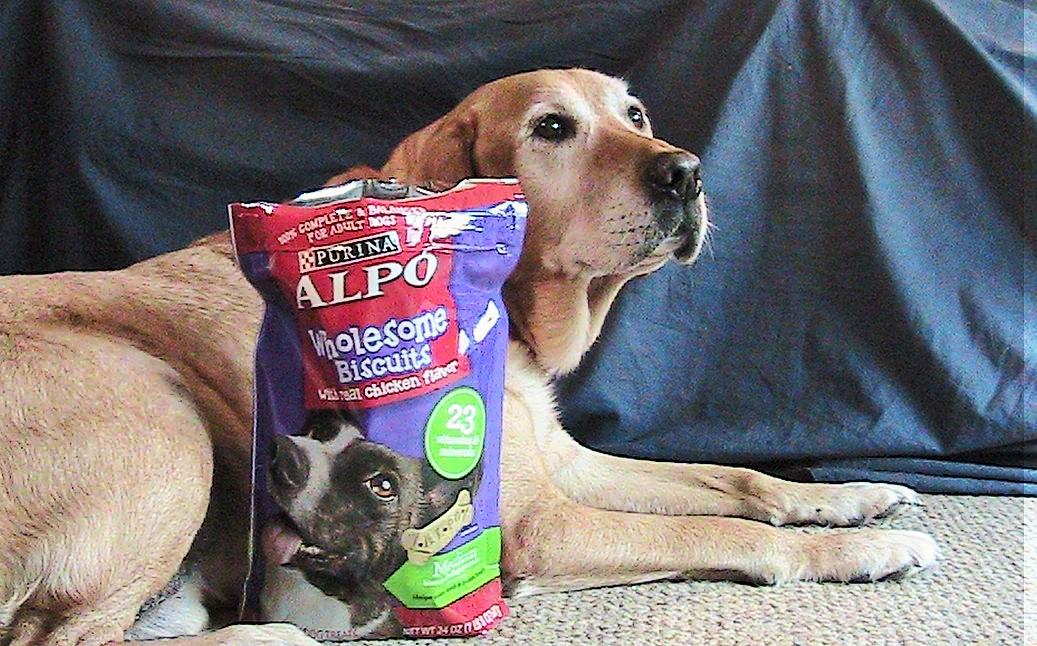Alpo Wholesome Dog Biscuit Review with Jake
