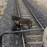 Donkey Tied to a Railroad Track Gets Saved Just in Time