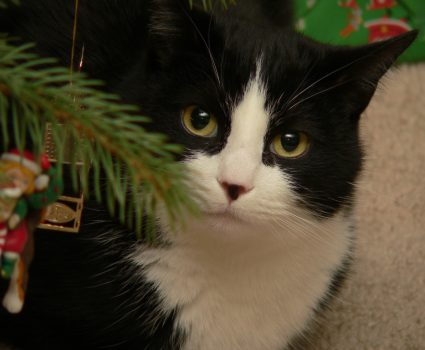Ways to Keep your Pet Safe over the Holidays
