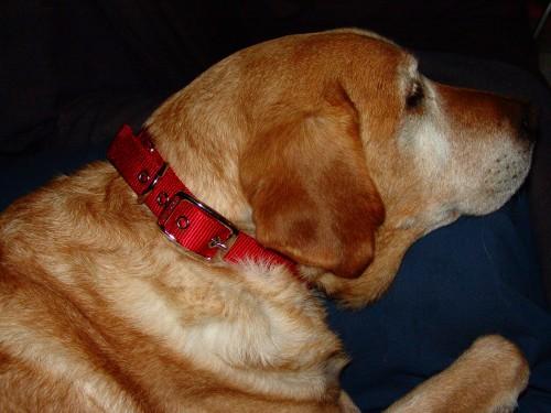 Hamilton Dog Collar Review, #HamiltonFashion Pet Products