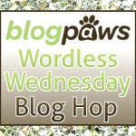 What is a Blog Hop? Find out here and come join the fun!