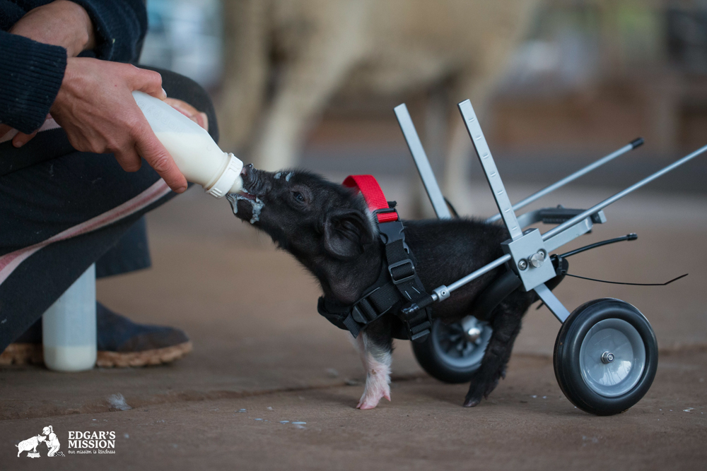 Edgars Mission Farm Sanctuary, Compassion for all Animals