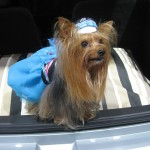 Guide To Exporting Pets Provided by Pet Care Experts
