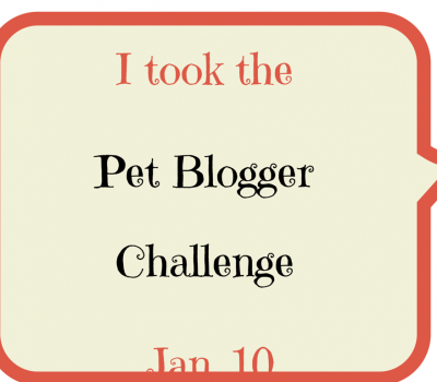 Animal Bliss Pet Blogger Challenge 2015 Blog Hop