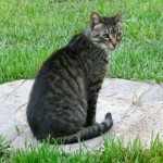 Wordless Wednesday : Blog Hop, Jessie Cat