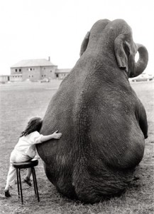 Little Girl and Elephant. httpswww.flickr.com photos donotdestroy