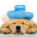 6 Subtle Signs Your Pet May Be Sick (and what to do about it)