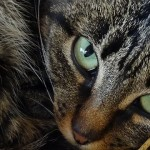 Why Cats Make Such Good Pets | Feline Companions