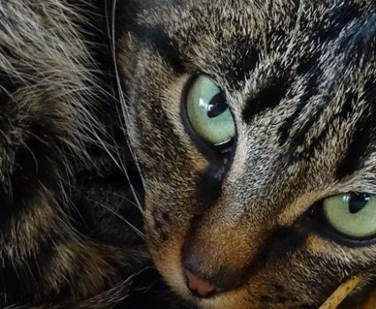 Why Cats Make Such Good Pets   Feline Companions