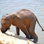 "Clumsy Baby Elephants Video That Will Make You Say ""Aww"""