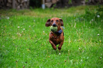 Dog Adventures - 3 Fun Activities to Do With Your Dog