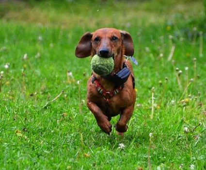 3 Fun Activities to do With Your Dog Outside