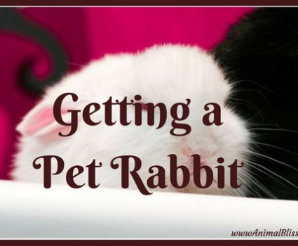 Things You Need to Know Before Getting a Pet Rabbit