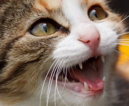 10 Fun Facts About Cats You Never Knew