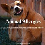 Animal Allergies : 5 Helpful Things Pet Owners Should Know