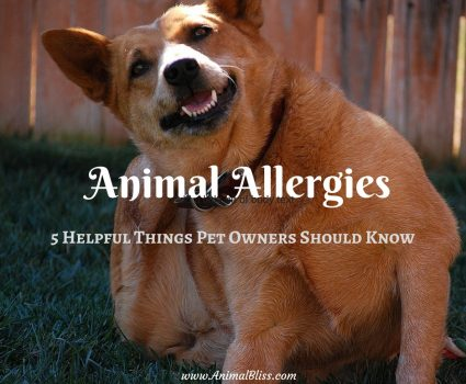 Animal Allergies : 5 Helpful Things Pet Owners Should Know