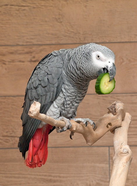 Things You Should Know About African Grey Parrots Diet - www.AnimalBliss.com