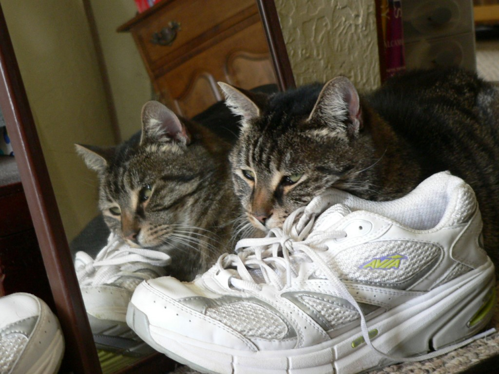 Wordless Wednesday, One Cat? or Two?