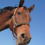 5 Must-Have Trailer Features for Special Needs Horses