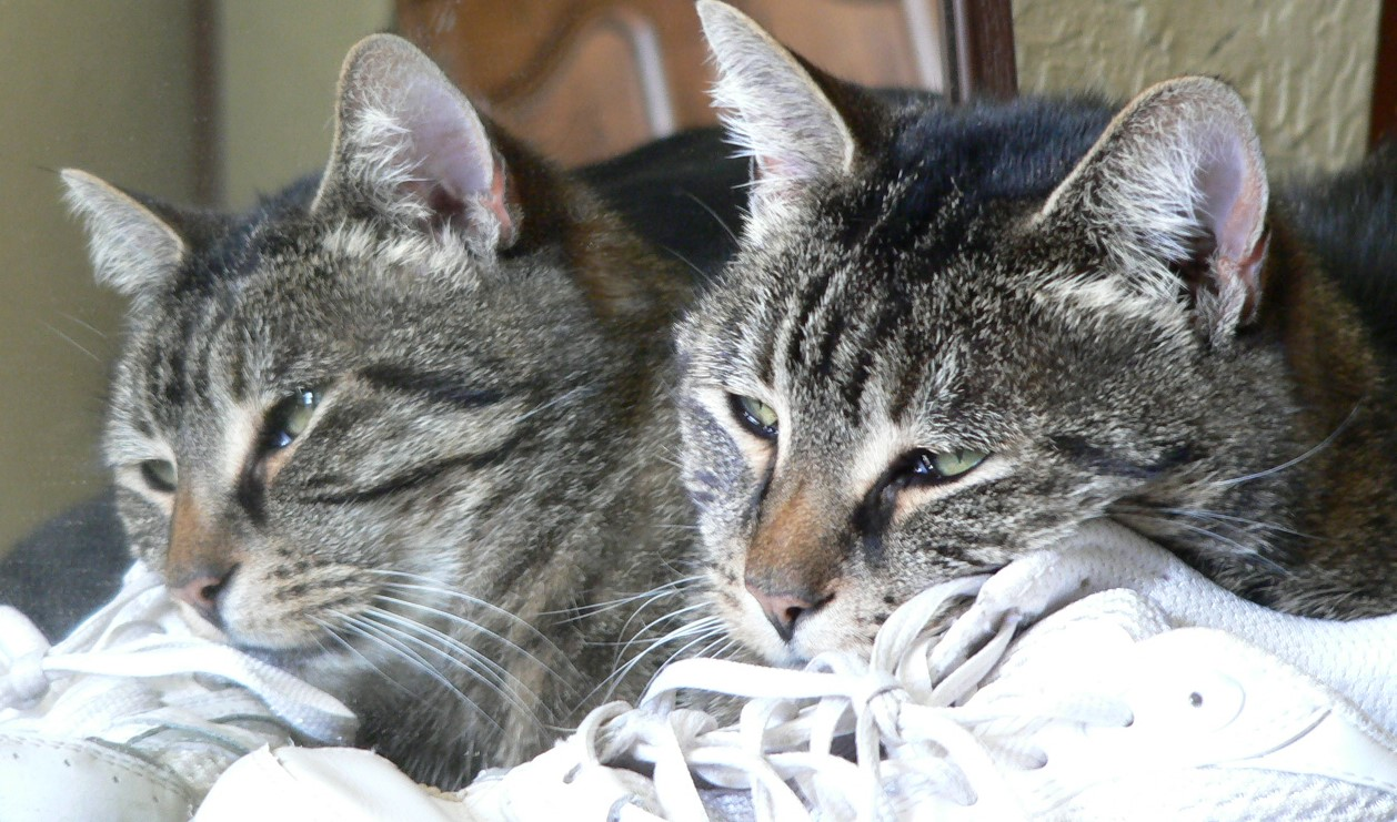 Another Wordless Wednesday Blog Hop, One Cat? or Two?