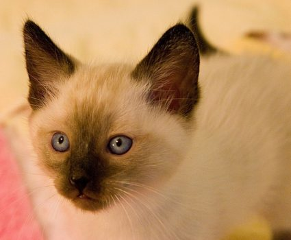 4 Signs Your Kitty's Sniffles Require a Vet Visit