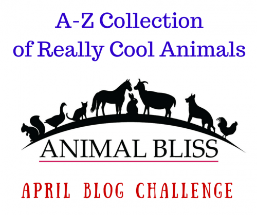 A-Z Collection of Cool Animals. April A-Z Blog Challenge