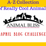 A-Z Collection of Cool Animals : A-Z Challenge Theme Reveal