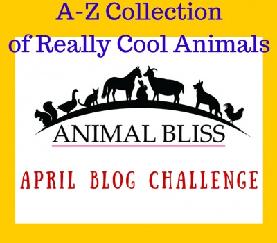 A-Z Challenge 2015 : A-Z Collection of Really Cool Animals
