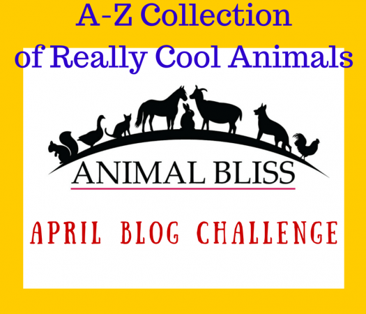 A-Z Collection of Really Cool Animals