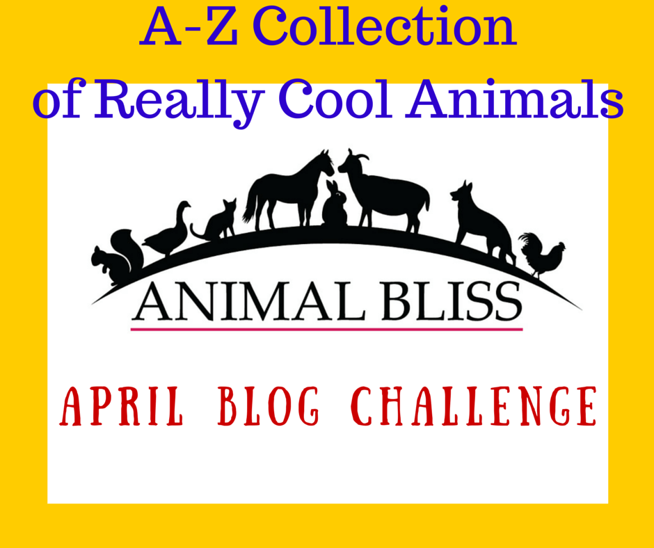 A-Z Collection of Cool Animals -  April A-Z Challenge Theme Reveal