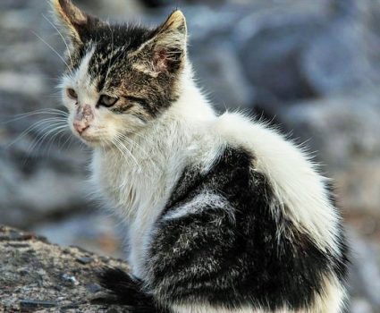 Why Adopting a Stray Cat will be the best decision of your life