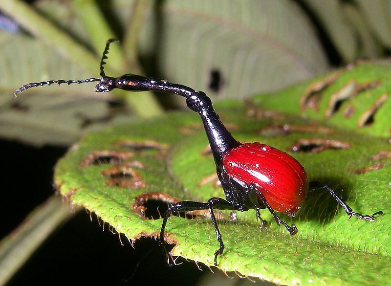 W is for Giraffe Weevil : A-Z Collection of Really Cool Animals