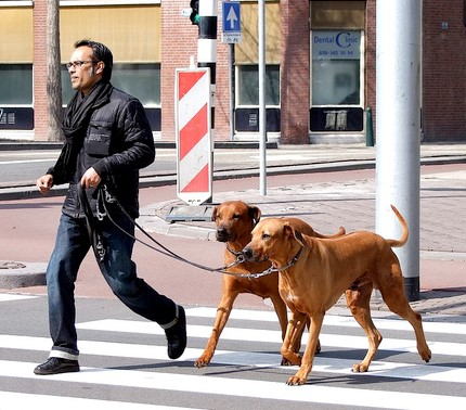 How to Walk Your Dog : Loose-Leash Walking Tips
