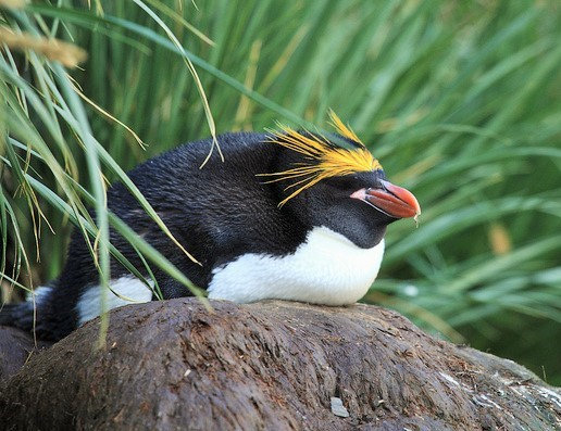 M is for Macaroni Penguin Facts : A-Z Collection of Cool Animals Challenge