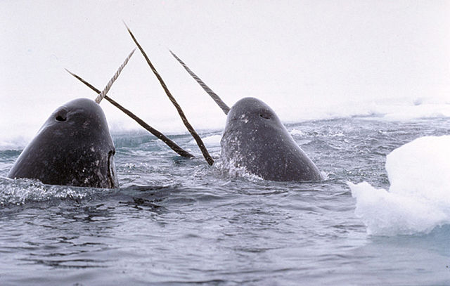 N is for Narwhal Facts : A-Z Collection of Really Cool Animals