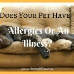 Does Your Pet Have Allergies Or An Illness? How Can You Tell?